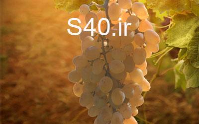 انگور آبنباتی خارجی